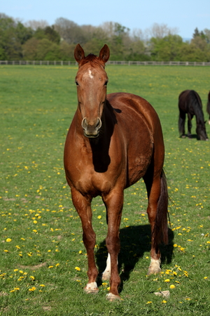 trakehner: A Herd of Horses at a Horse Farm Stock Photo