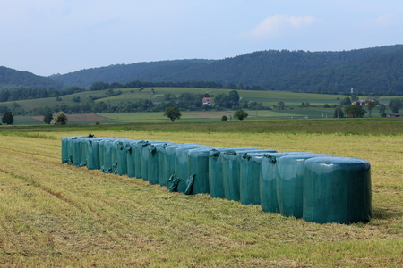 animal feed: Animal feed from grass silage