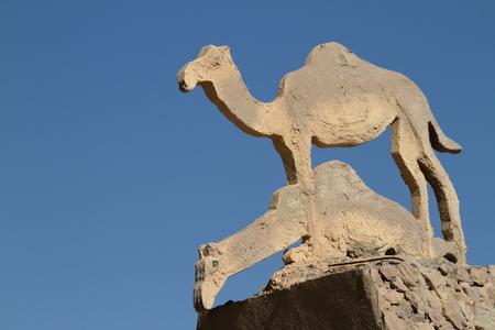 dromedaries: Camels and dromedaries Stock Photo