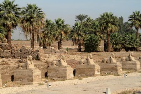 sphinx: El camino de la Esfinge de Luxor en Egipto