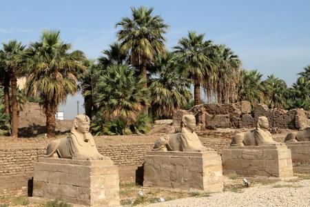 esfinge: El camino de la Esfinge de Luxor en Egipto