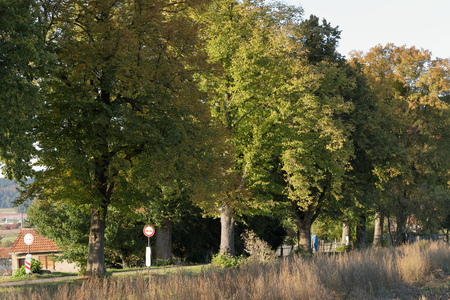 tilo: The Linden Tree Alley near Herleshausen in Germany