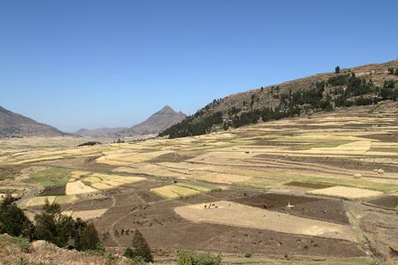 Grain harvest and fields in Ethiopia Stock Photo