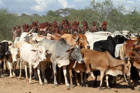 rancheros: La tribu de Hamar en el valle de Omo de Etiopía