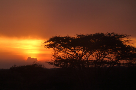 Sunset in the savannah of Africa