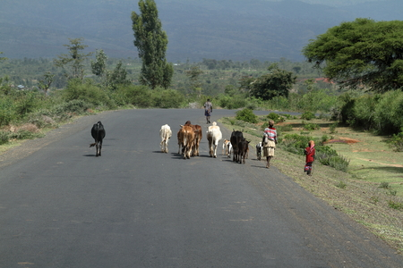 rancheros: Animales en las calles de Etiopía, 17. Octubre 2012