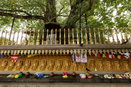 Sacrifices under the bodhi tree from the Kelaniya Raja Maha Vihara temple in Colombo
