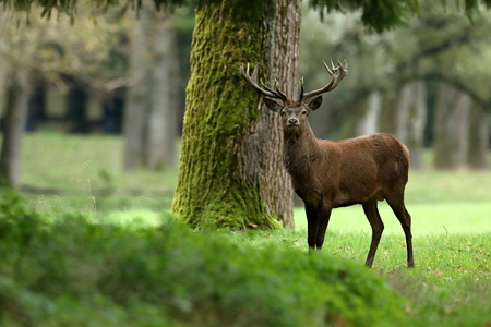 Red deer in the forest and during the rut Stok Fotoğraf