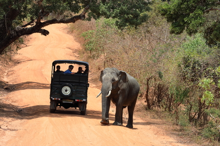 Wild elephants in the Yala National Park of Sri Lanka Stock Photo
