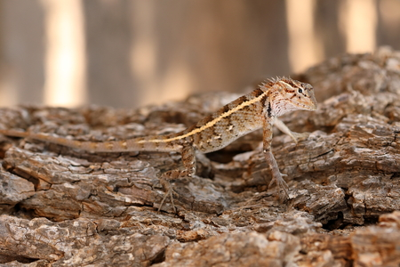 Reptiles in the Yala National Park in Sri Lanka Stock Photo