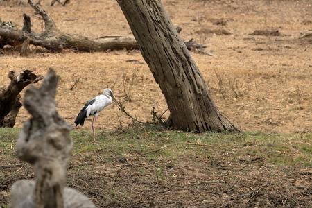 Stork at Yala National Park in Sri Lanka