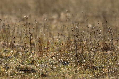 Meadow with withered grass and meadow flowers in autumn