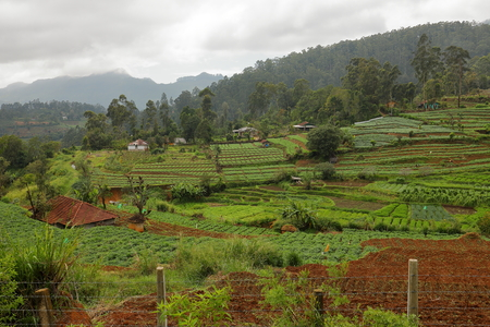 Agriculture and fields in Sri Lanka