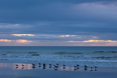 Sunset with seagulls in Normandy