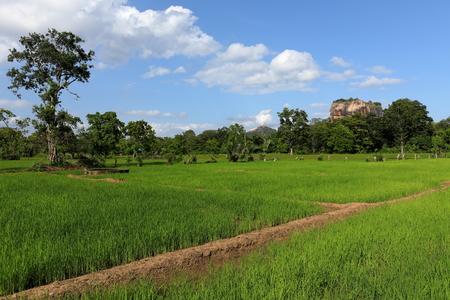 Rice fields at Sigiriya lion rock in Sri Lanka Stock Photo