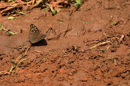 Butterfly from Sri Lanka