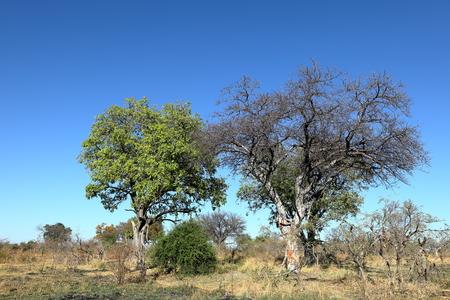Landscape of the Okavango Delta in Namibia