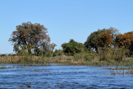 Landscape in the Okavango Delta in Botswana Imagens