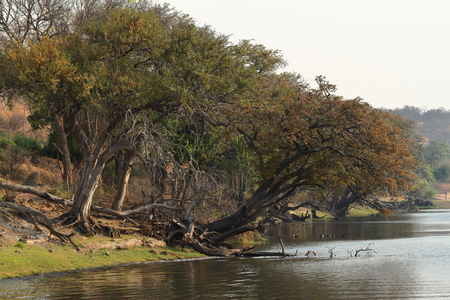 River landscape at Chobe National Park of Botswana Stock Photo