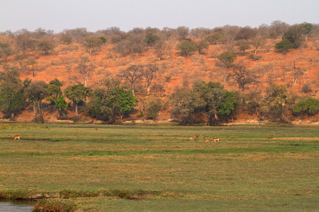 the savannah at Chobe National Park Stock Photo