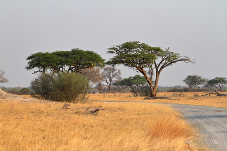 The Savannah in Southern Africa