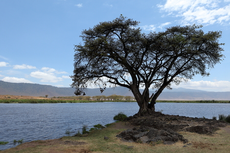 Lake in the Ngorongoro Crater in Tanzania Reklamní fotografie