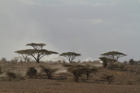 The Savannah of the Serengeti in Tanzania
