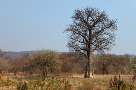 Forest and Landscapes in Malawi