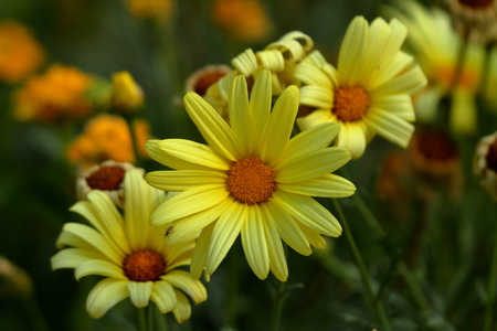 Yellow flowers and blossoms