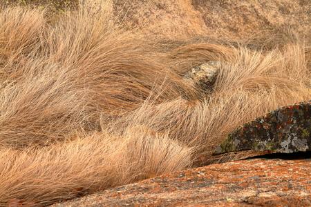 Dry grass in the savannah Banco de Imagens