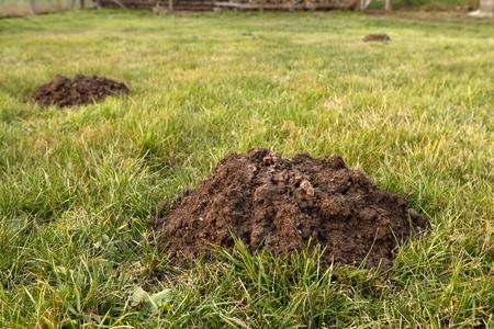 A molehills in the garden
