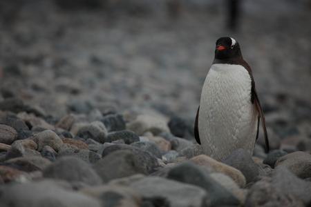 Wildlife and Penguins of Antarctica