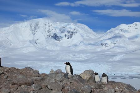 Penguins at Antarctica