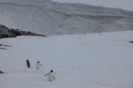 The Penguins and Wildlife of Antarctica