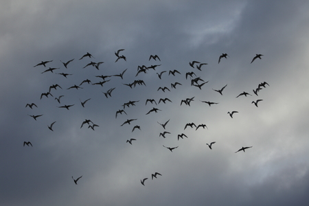 A Colony of Sea Terns at Antarctica