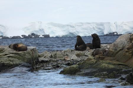 Seals and Wildlife of Antarctica 写真素材