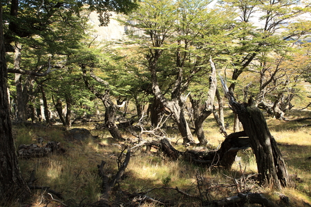 The National Park Los Glaciares near El Chalten