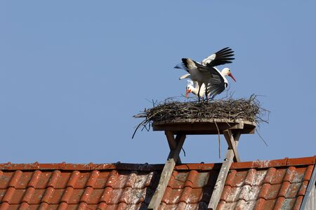 White stork on the nest Banque d'images - 131298453