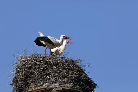 White stork on the nest Imagens