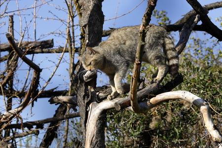 The European Wildcat Stok Fotoğraf