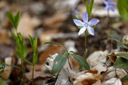 Spring flower in the forest