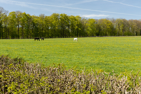 The Horse Farm of Altefeld in Germany