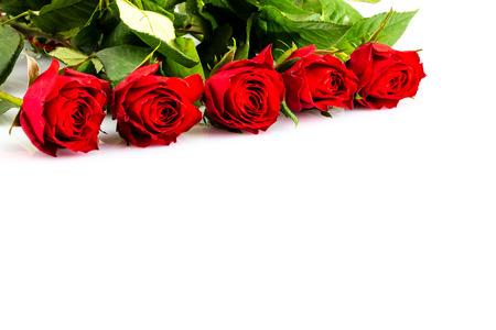 Eine rote Rosen für die Liebe