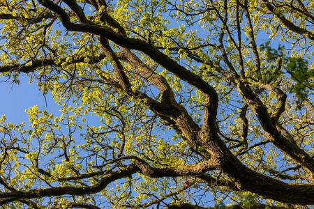 Het groene bos in de lente Stockfoto
