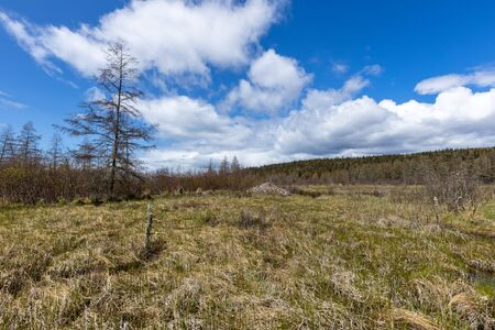 Forest of the Pukaskwa National Park in Canada