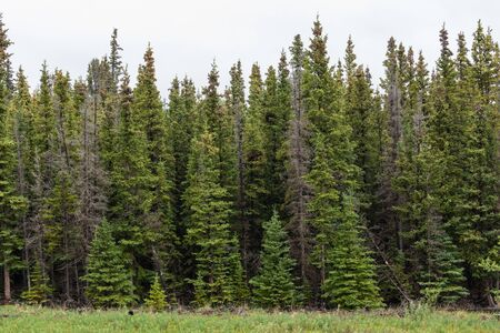 Forest with Lake in the north of Canada