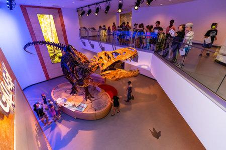 Skeleton and Bones of a Dinodsaur