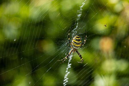 Wasp spider in tall grass Reklamní fotografie