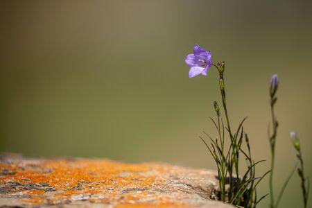 Flowers of the Dinosaur Provincial Park Canada Фото со стока