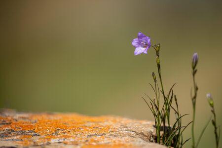 Flowers of the Dinosaur Provincial Park Canada 免版税图像